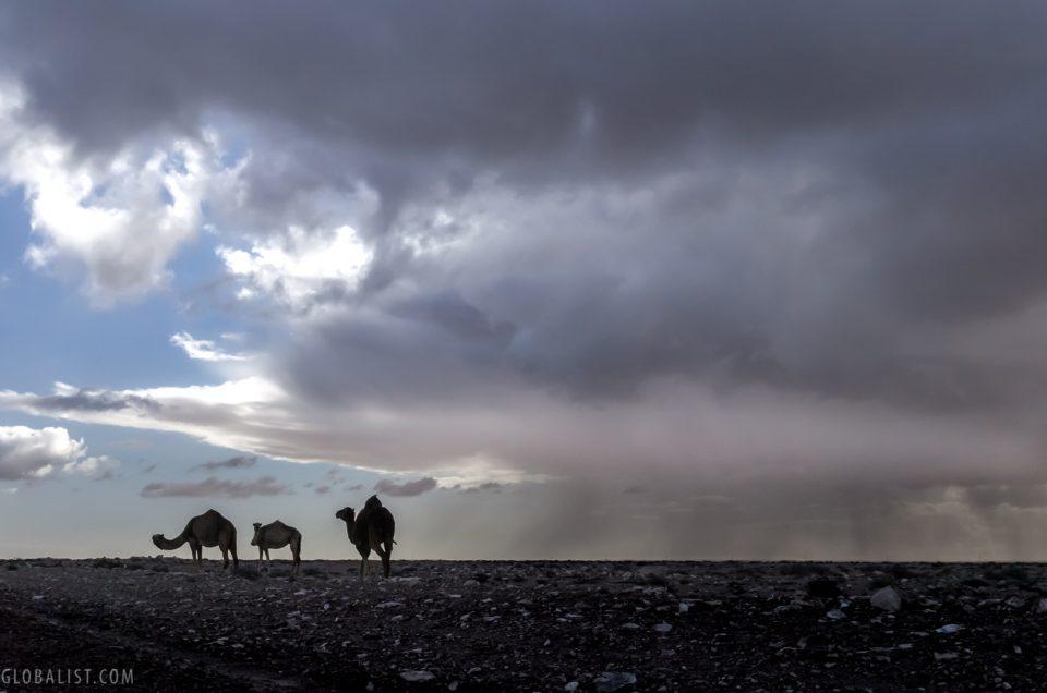 Into Western Sahara